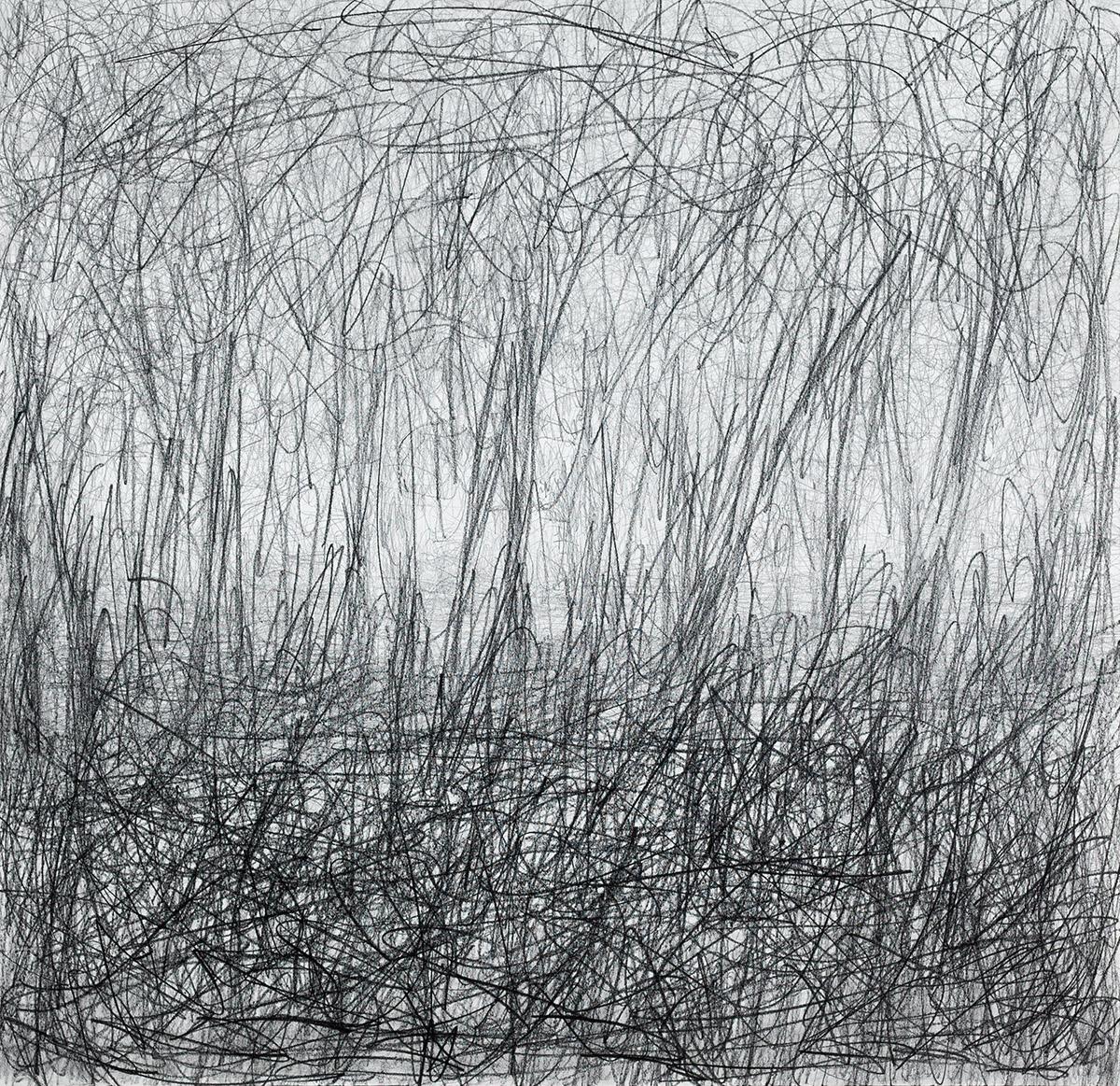Landscape - Spring